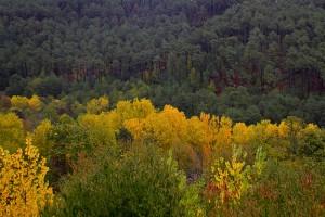 Verde-e-amarelo, Ordesa, Pirenéus, Espanha